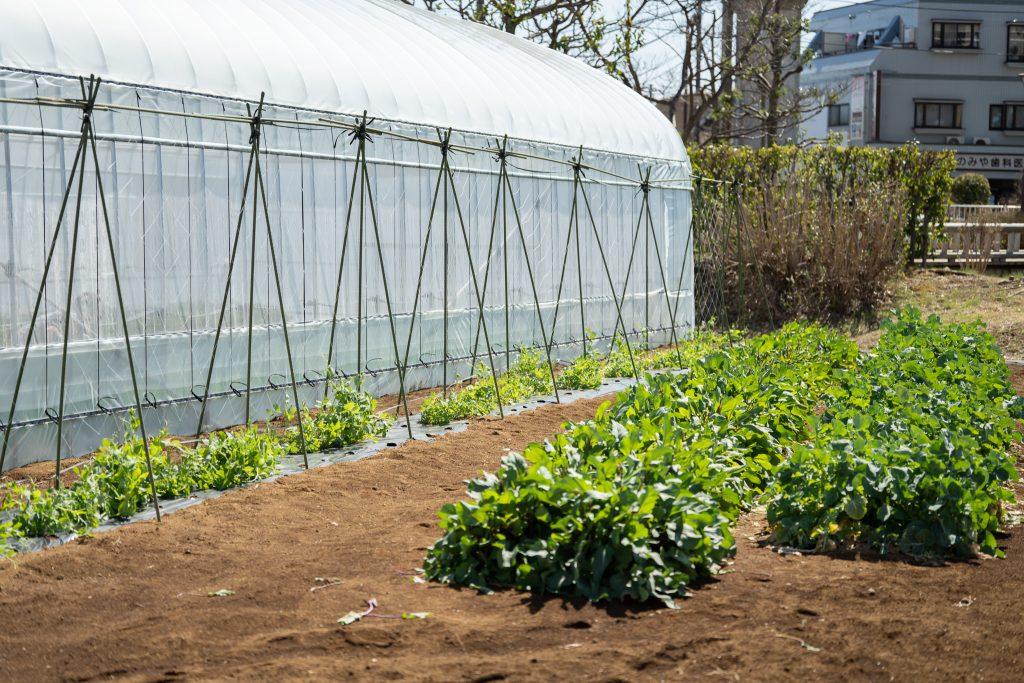 Neighbor's Farm露地栽培